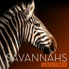 Album art for the SCORE album SAVANNAHS.