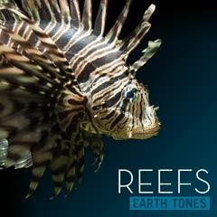 Album art for REEFS.