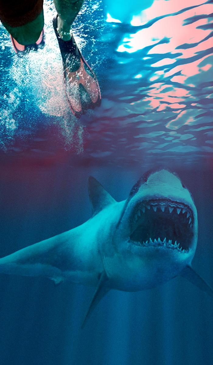 Image for SHARK WEEK