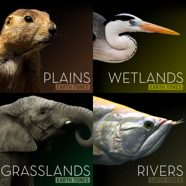 Playlist artwork of NATURAL HISTORY