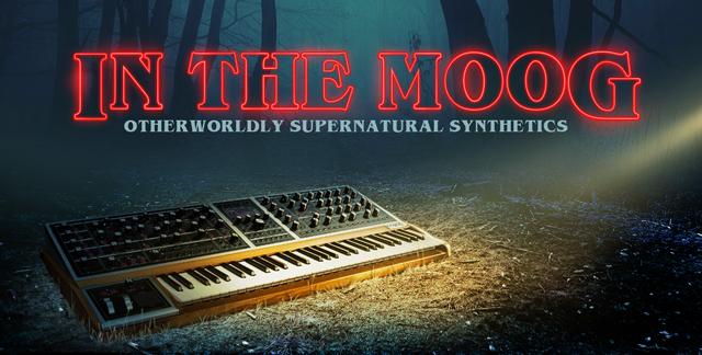 Album art for IN THE MOOG.